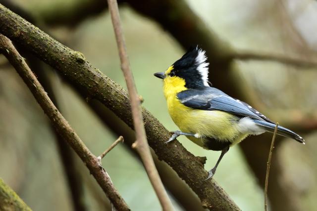 森林の野鳥たち(4)