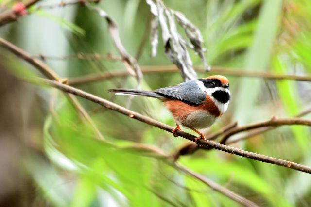 森林の野鳥たち(2)
