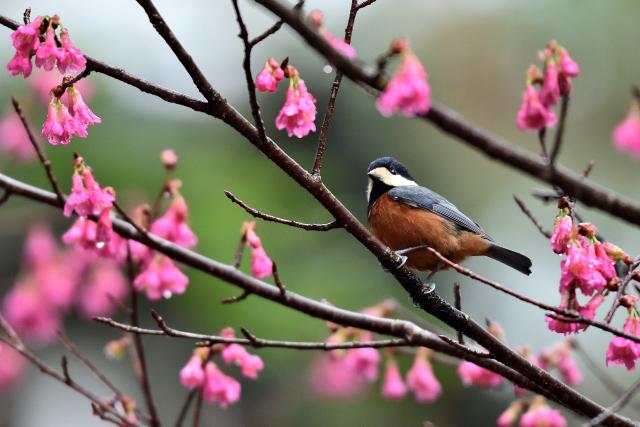 森林の野鳥たち(1)