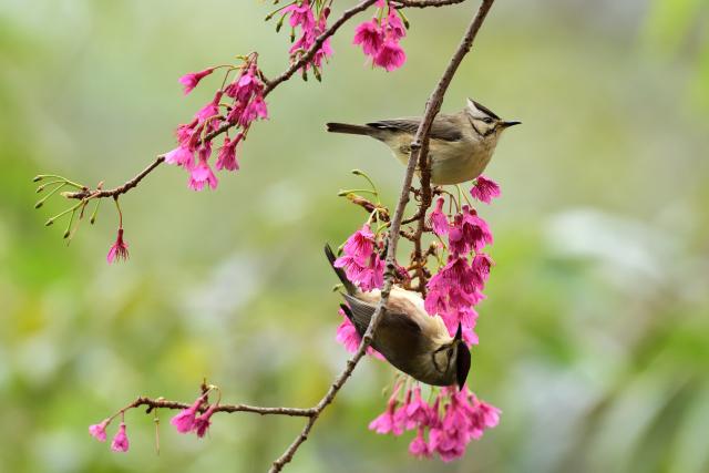 春を告げる鳥(6)