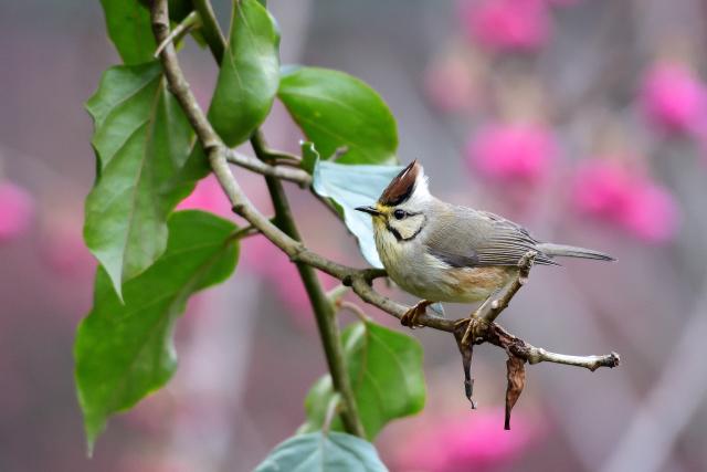 春を告げる鳥(7)