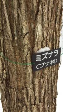 志賀坊スノー (5)_500
