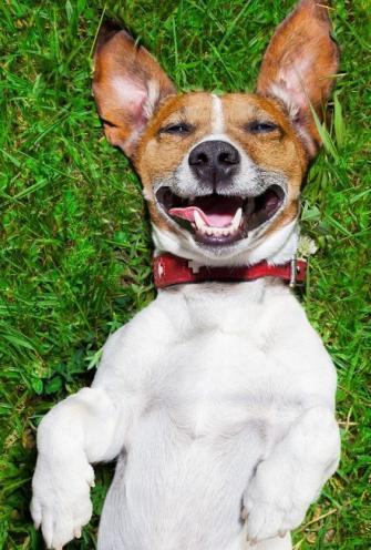 笑う犬の写真 335