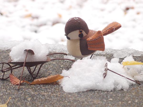 すずめ雪かき