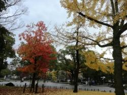 平和記念公園の紅葉