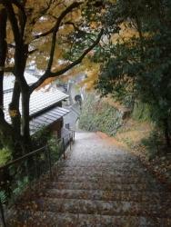 朝の宮島散歩