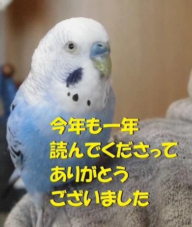 CIMG0617.jpg