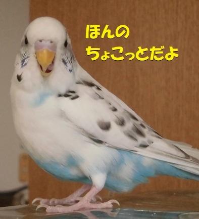 CIMG0647.jpg