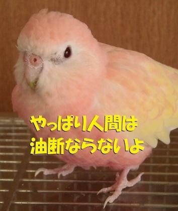 CIMG0744.jpg