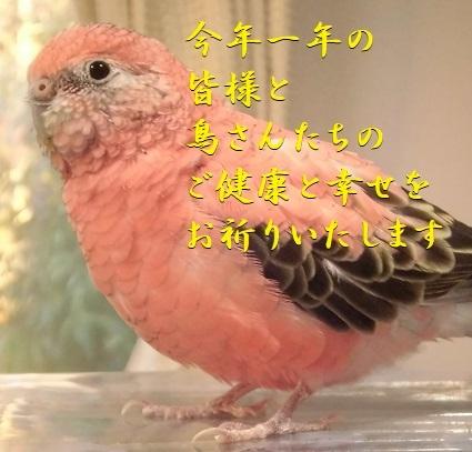 CIMG0751.jpg