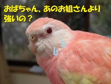 CIMG0760.jpg