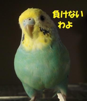 CIMG0775.jpg