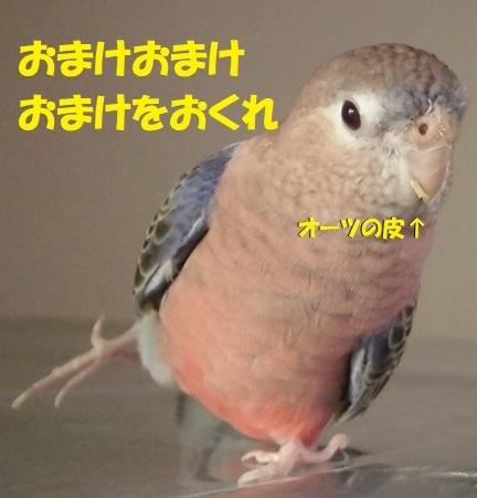 CIMG0789.jpg
