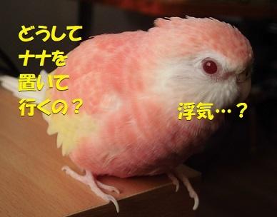 CIMG1403.jpg