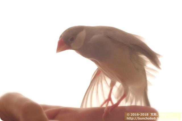 【ネムイちゃん】2018年もよろしくお願いします!