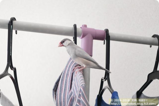 【今週ネム】体重安定と川の野鳥!