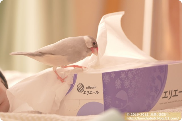 【今週ネム】ペレットを!食べれるように!なりました!!!