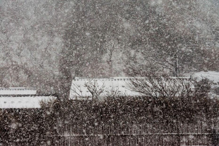 2018.01.11 雪の上大沢 3