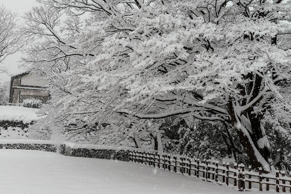 2018.02.05 金沢城の雪景色 4