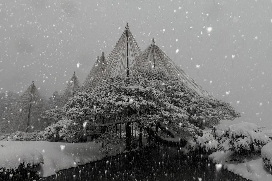 2018.02.05 雪降る兼六園 4