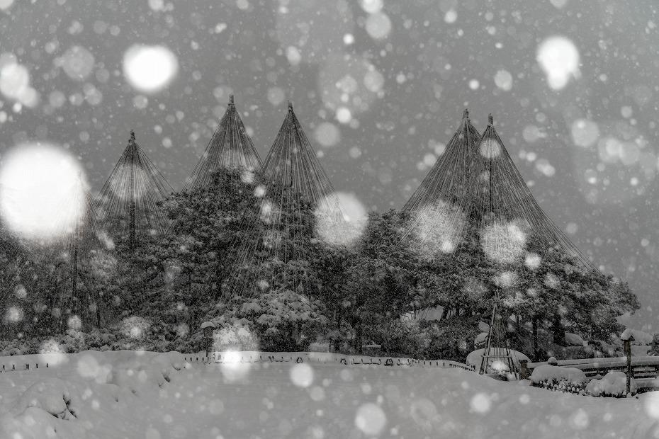 2018.02.05 雪降る兼六園 2