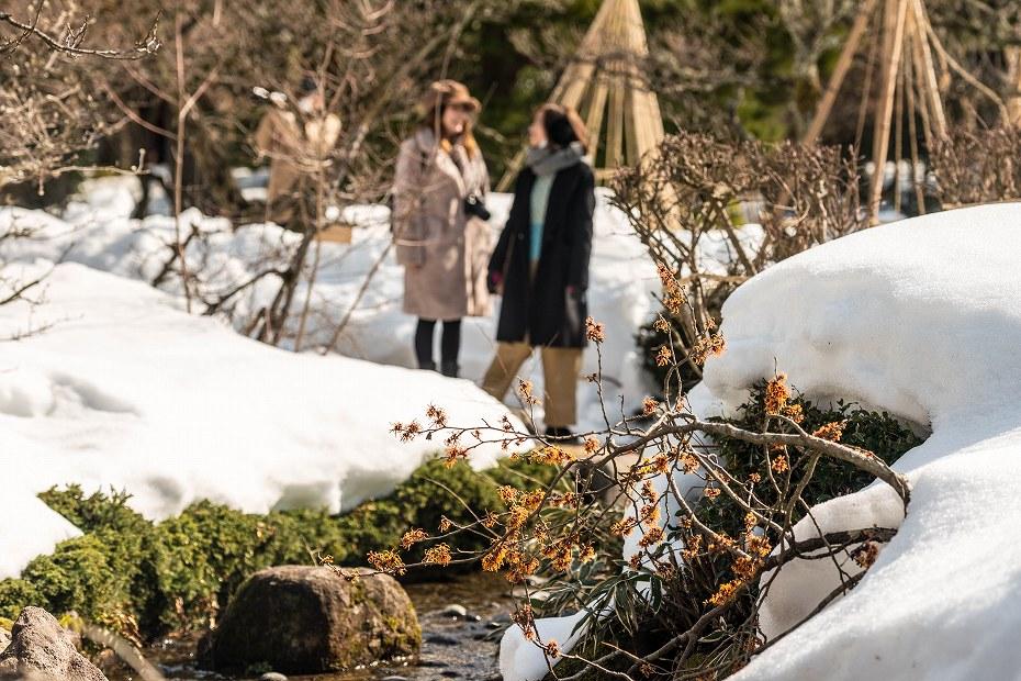 2018.02.20 兼六園の花 6