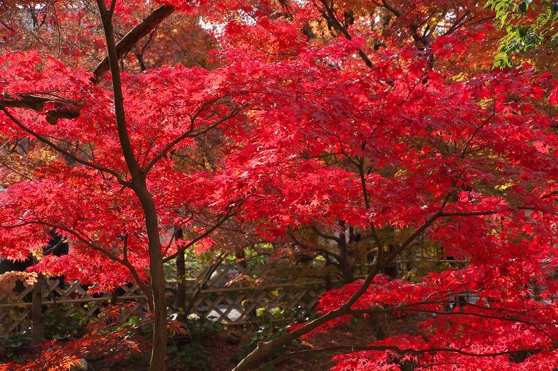 2017-12-21-1京都紅葉1