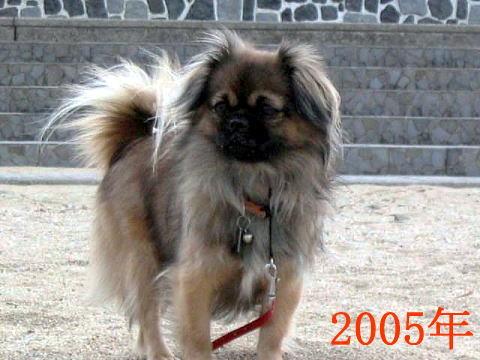 チョビ2005