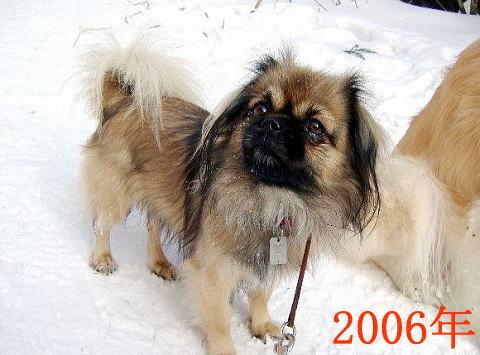 チョビ2006