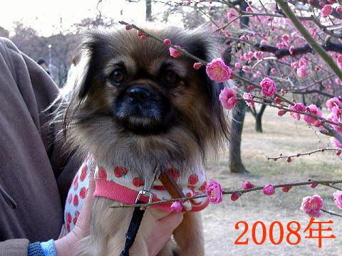 チョビ2008