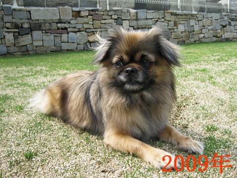 チョビ2009