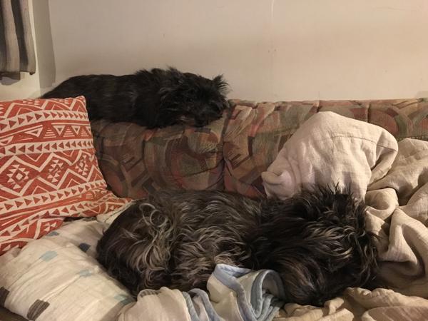 二段ベッド2