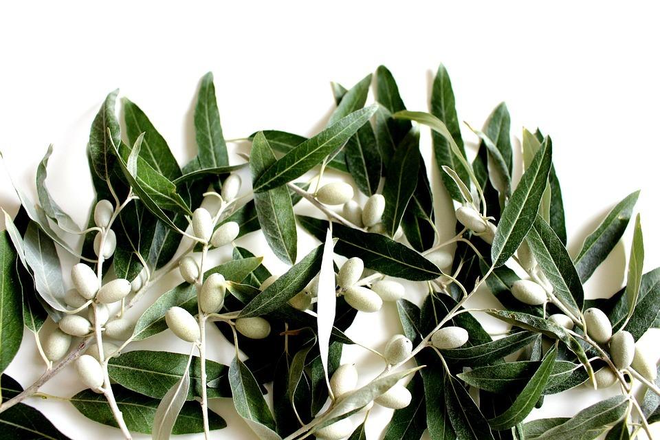 olive-leaf-2657695_960_720.jpg