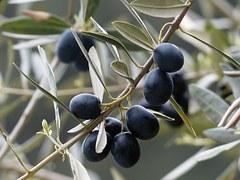olives-357849__180.jpg