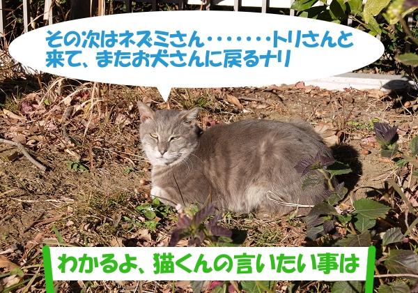 その次はネズミさん・・・トリさんと来てまたお犬さんに戻るナリ 「わかるよ、猫くんの言いたい事は