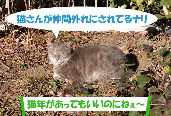 猫さんが仲間外れにされてるナリ「猫年があってもいいのにねぇ~」