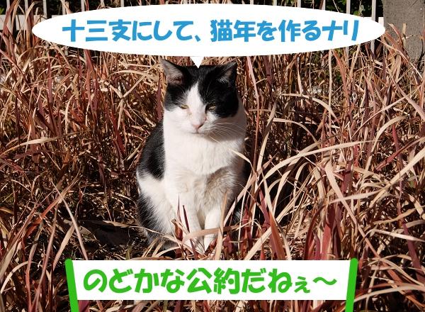 十三支にして、猫年を作るナリ 「のどかな公約だねぇ~」