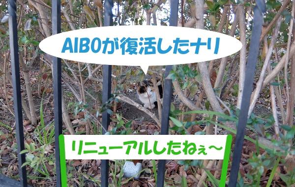 AIBOが復活したナリ「リニューアルしたねぇ~」