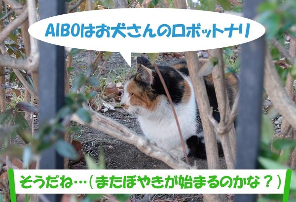AIBOはお犬さんのロボットナリ「そうだね…(またぼやきが始まるのかな?)」
