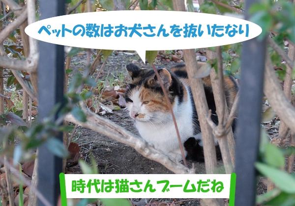 ペットの数はお犬さんを抜いたなり「時代は猫さんブームだね」
