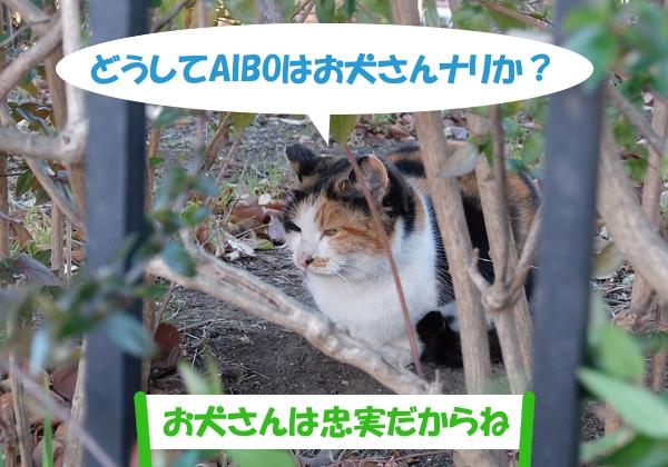 どうしてAIBOはお犬さんナリか?「お犬さんは忠実だからね」