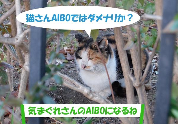猫さんAIBOではダメナリか?「気まぐれさんのAIBOになるね」