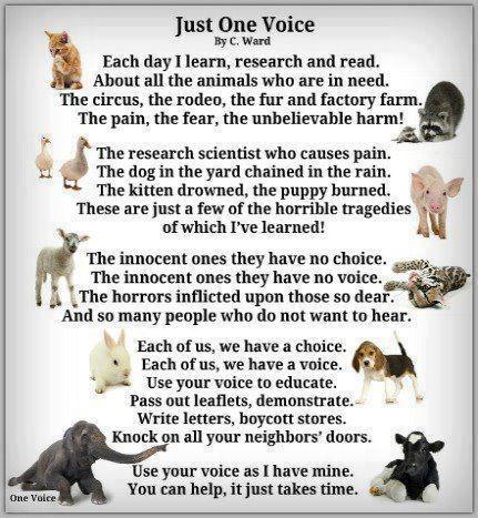 16ae0ec0a178867763dbee38691b08c5--animal-welfare-animal-cruelty.jpg