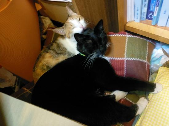 すみ太郎&ノイン-32