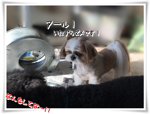 IMG_3798_1.jpg