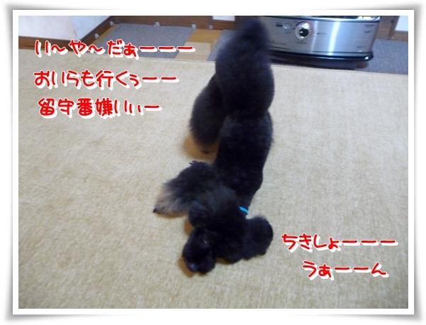 P1150346_1.jpg