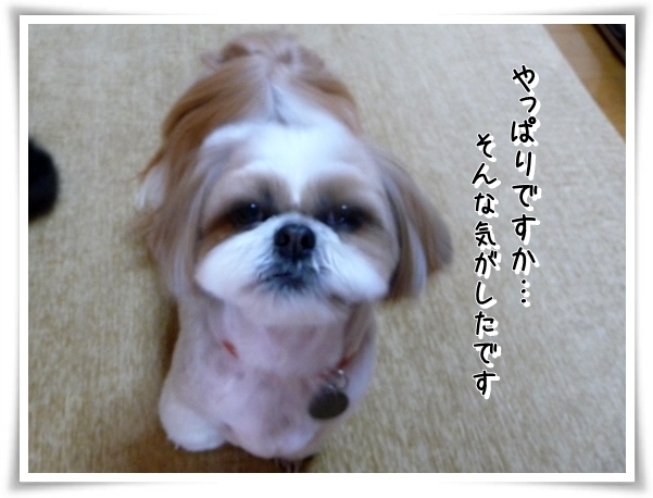 P1150349_1.jpg