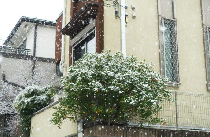 雪-042