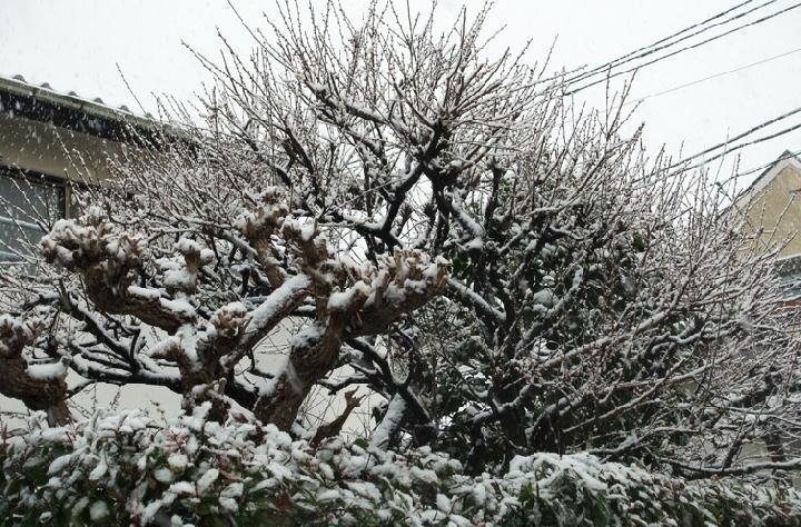 雪-057