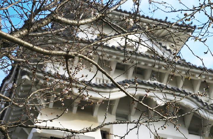 四季桜-953-1